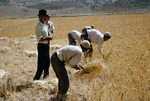 Wheat harvest in Boir Ahmad village by Reinhold Loeffler
