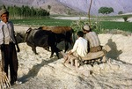 Threshing machine pulled by oxen at wheat harvest, Boir Ahmad by Reinhold Loeffler