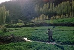 Farmer irrigating his clover field, Boir Ahmad village by Reinhold Loeffler