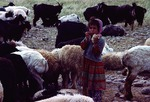 Girl helping with sheep at milking time in Boir Ahmad by Reinhold Loeffler