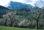 Spring landscape, Sisakht, Boir Ahmad by Reinhold Loeffler