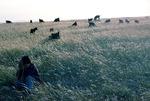 Shepherd with goats in Boir Ahmad by Reinhold Loeffler