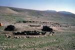 Goat herd returns to camp for mid-day milking, Boir Ahmad by Reinhold Loeffler