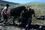 Transhumance pastoralists breaking up camp for migration, Boir Ahmad by Reinhold Loeffler
